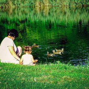 35. observer un étang