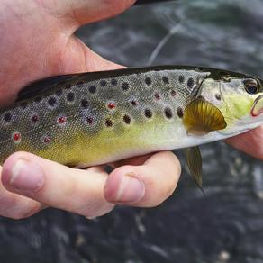 8.  repérer un poisson