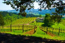 2016_04_19_david_hill_winery_IMG_4786a