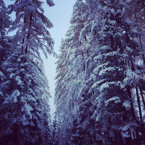 Camping-Lanchettes-hiver-foret.JPG
