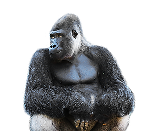 RBZ Gorilla.png