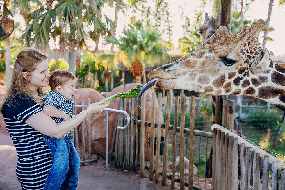 FEATURE PHOTO- Animal Interaction 1.jpg