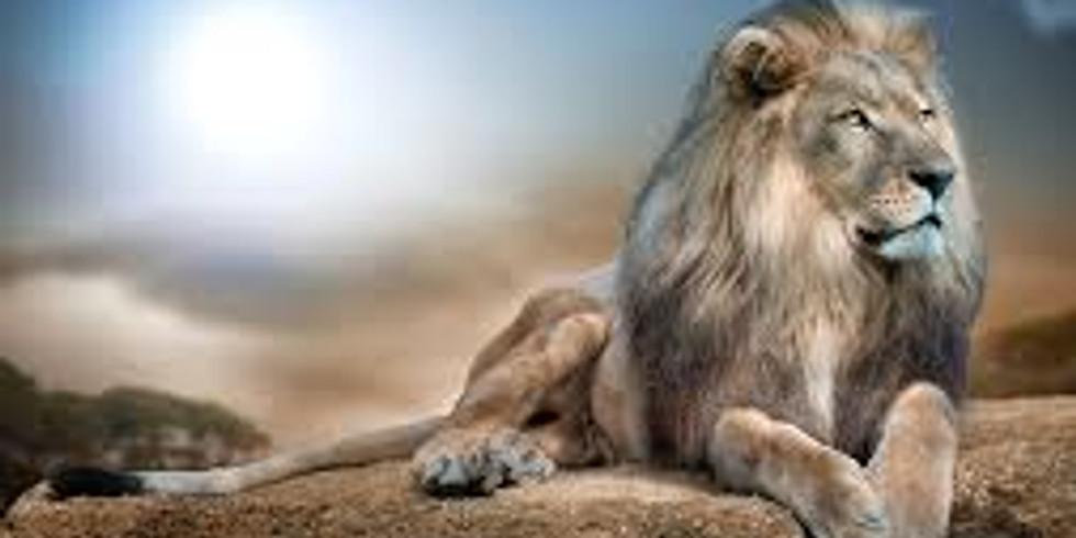 Lion Kingdom - Recital 2021