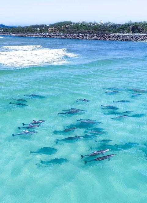 Nambucca Heads Dolphins