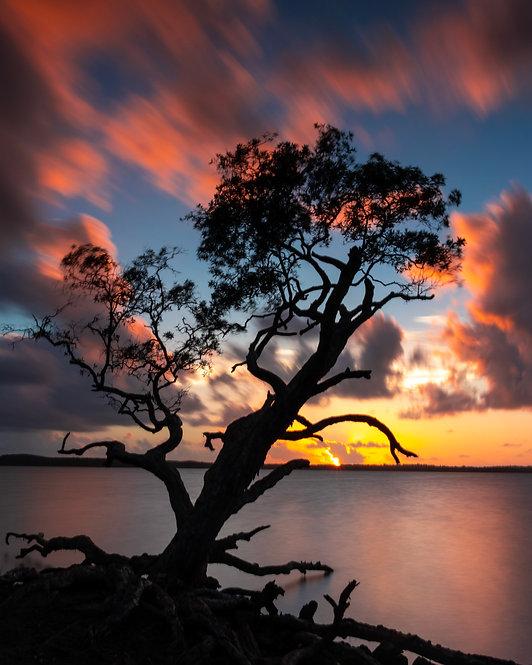 That Lake Weyba Tree