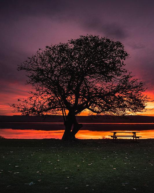 Windang Tree