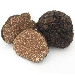 Truffe noire brossée extra d'hiver 25g