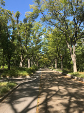 靭公園 2019 summer