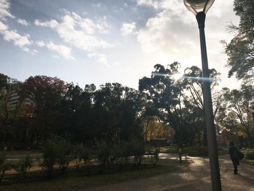 周辺環境 / 靭公園