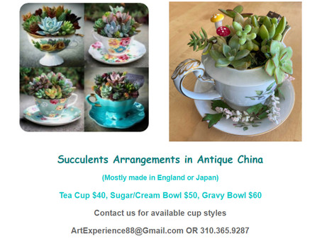 Succulent Arrangements in Antique China