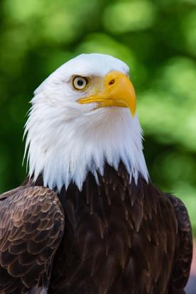 Eagle Gaze: 3D Character Design