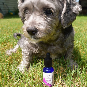 Dog Friendly 500mg CBD Oil