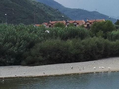 Albenga, il paesaggio su fiume.jpg