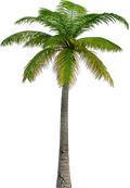 stop-universe-now-palm-tree.png