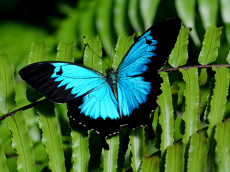 Butterfly Sanctuary_3.png