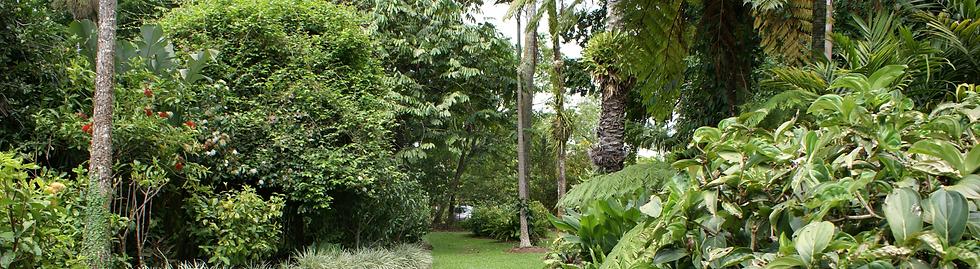 Cairns Botanic Gardens_Header.png