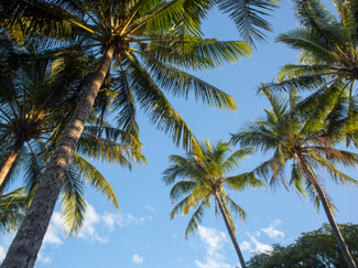 Cairns_Palm Cove_1.png