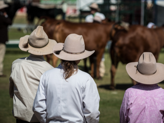 Cairns Show_Animals.png