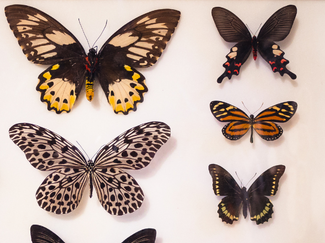 Butterfly Sanctuary_2.png