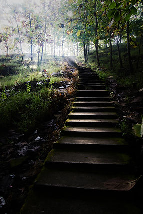 gray-concrete-stairs-leading-to-trees-99