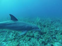 22.04.2014 dolphin 043