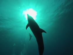 22.04.2014 dolphin 024
