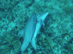 22.04.2014 dolphin 037