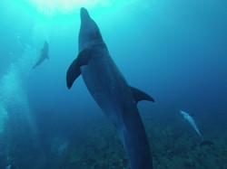 22.04.2014 dolphin 023