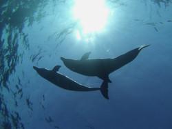 22.04.2014 dolphin 028