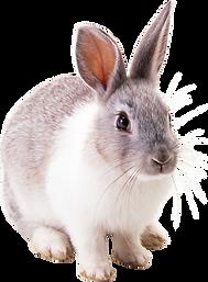 rabbit_PNG3781.png