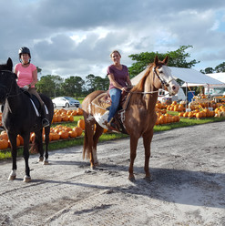 OUr first equestrian visitors