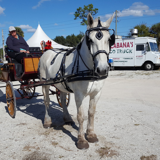 Stuart Horse Drawn Carriage Tours hits the parking lot for some of Mi Cabana's Mexican fare