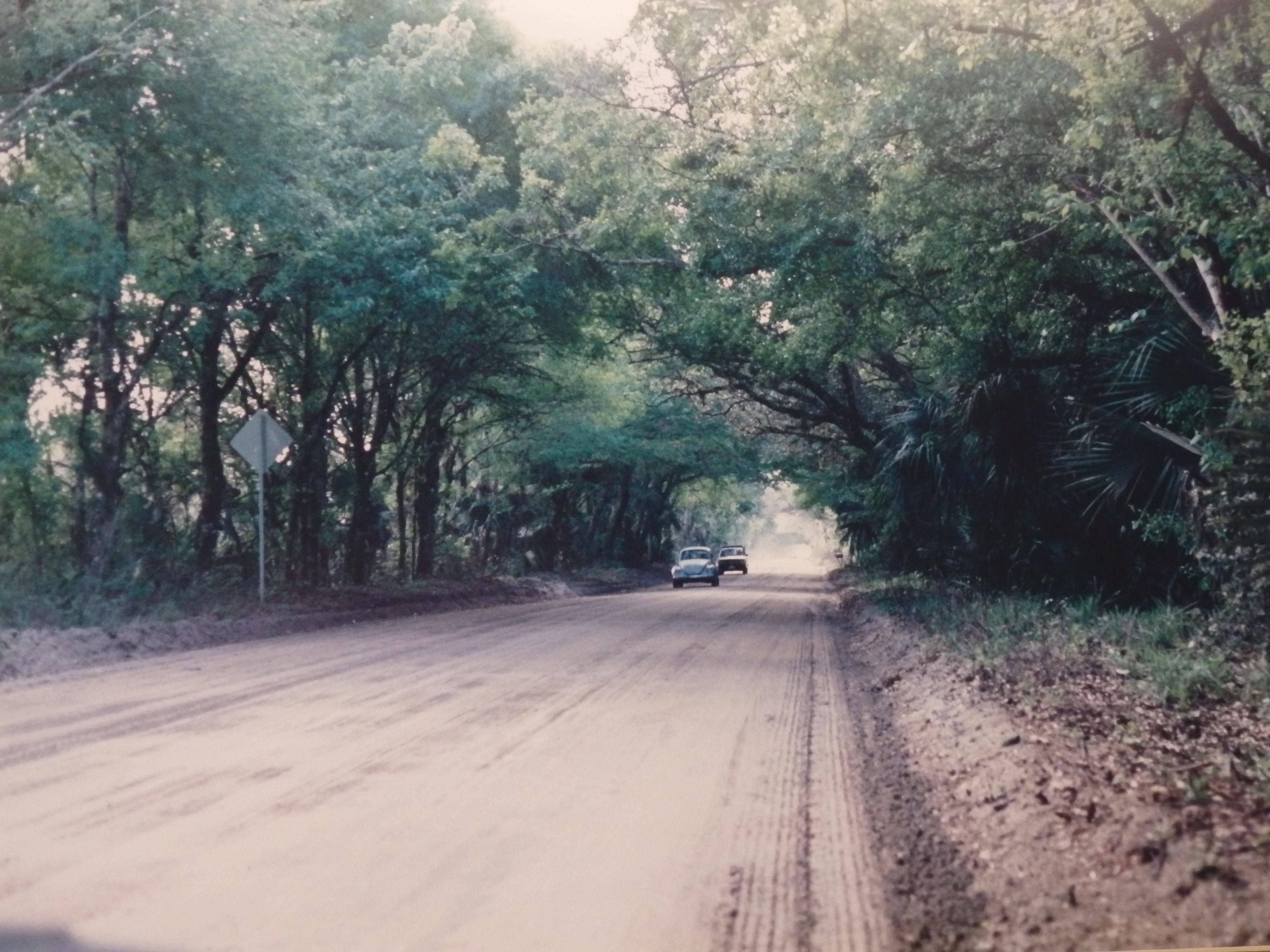 Martin Grade Tree Canopy 1994