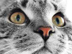 gatto_sito