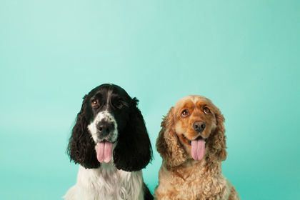 dog day care sydney