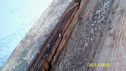 Wood rot