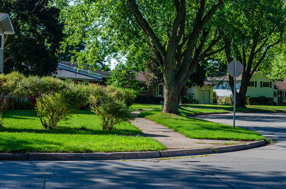 Front yard with shrubs and large leafy trees
