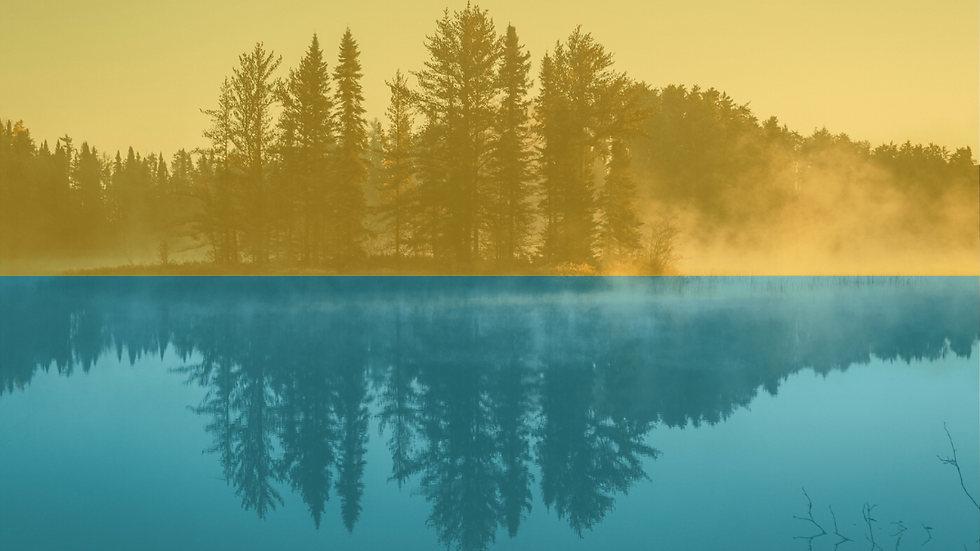Trees-reflecting-water-C-Collective.png