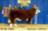 2008-Clyde--2008-NoAmInt-Grand-Champ-Bul