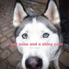 A Wet Nose and A Shiny Coat.jpg