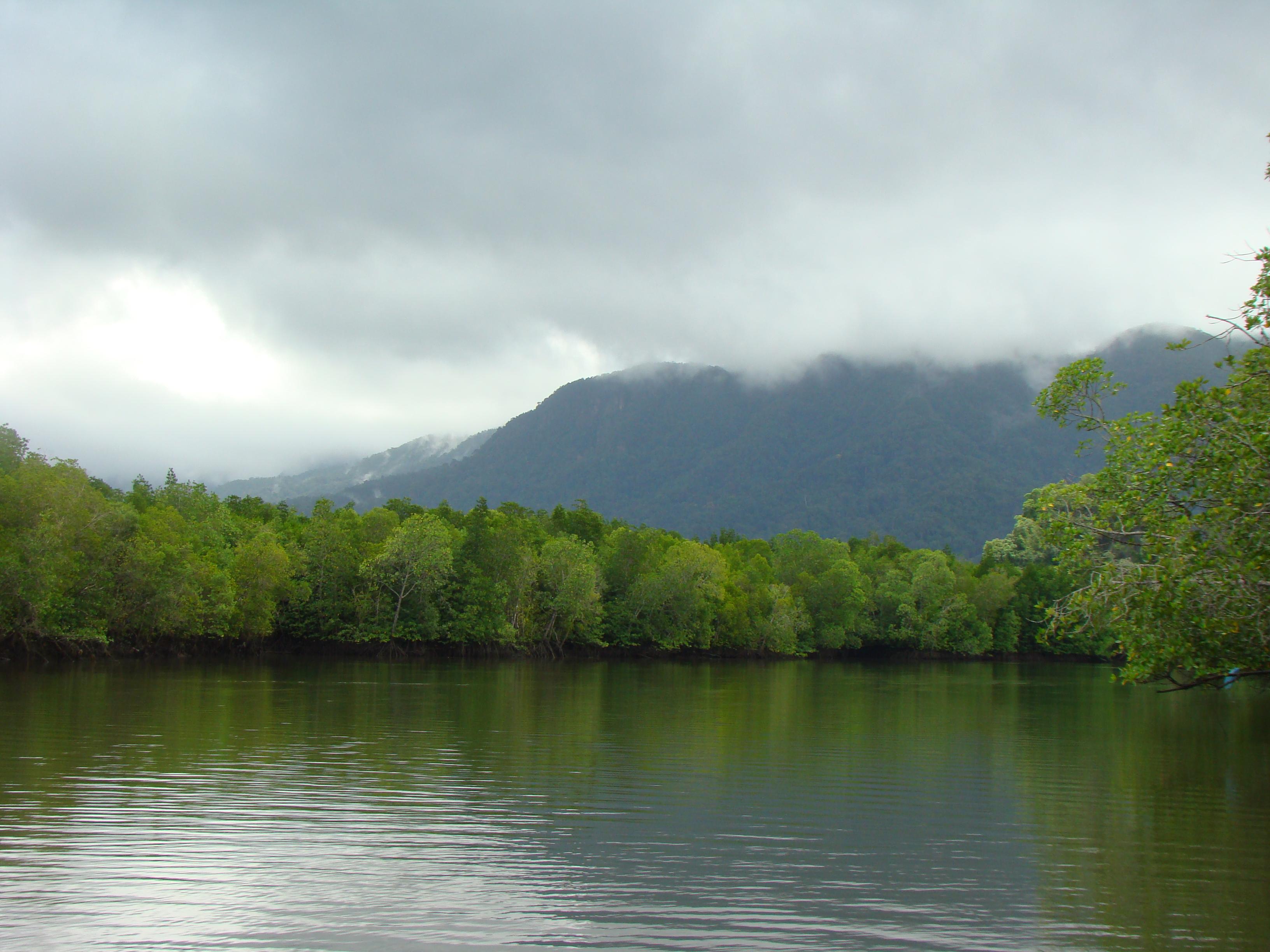 Mangrove Kubang Badak (7)