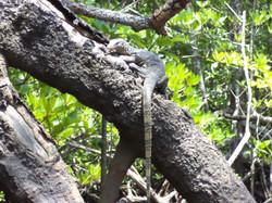 Mangrove Kubang Badak (18)