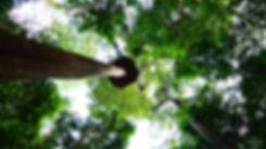 Amazing abseil at the zipline tour