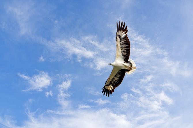 Umgawa Nature Series: 8 REASONS TO BIRDWATCH IN LANGKAWI