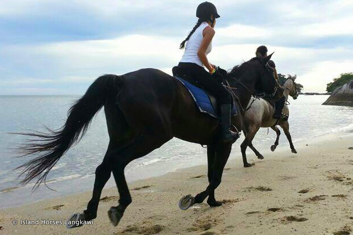 island-horses-langkawi-04