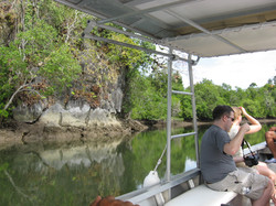 Mangrove Kubang Badak (16)