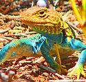 Lizard_green collar_Bug Pt (1).JPG