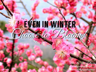 Even in Winter, Choose to BLOOM!