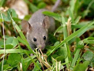 What I Know Now | We Can Learn A Lot From Mice