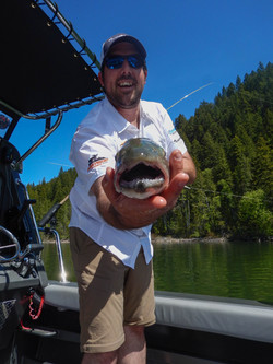 Bull Trout mouth